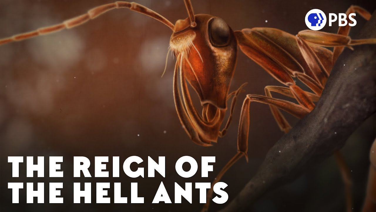 Download The Reign of the Hell Ants