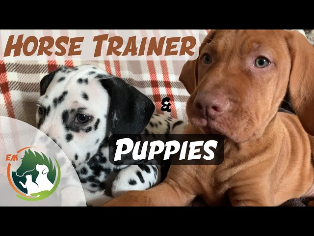 Training my two new PUPPIES! | Horse Trainers techniques!