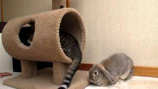 Нервный кролик )))