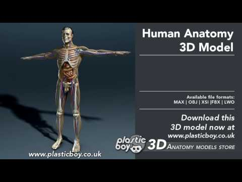 Human Anatomy 3d Model Plasticboy Youtube