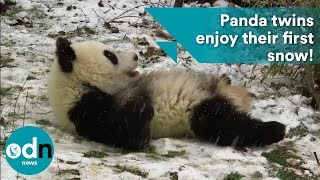 PANDA-monium as adorable twins enjoy their first snow!