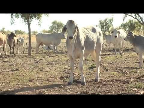 The Australian livestock export industry: The facts