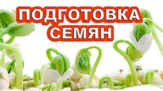 видео Подготовка семян к посеву