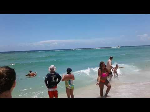 Shark in the water!! Miami beach today part 2 07-15-17