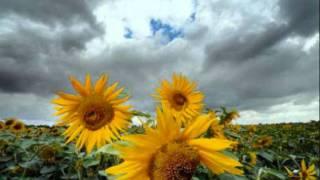 Download 4tune - Frühling, Arschloch, Herbst und Winter (Der Sooong) -Beat by JBeatzZz MP3 song and Music Video
