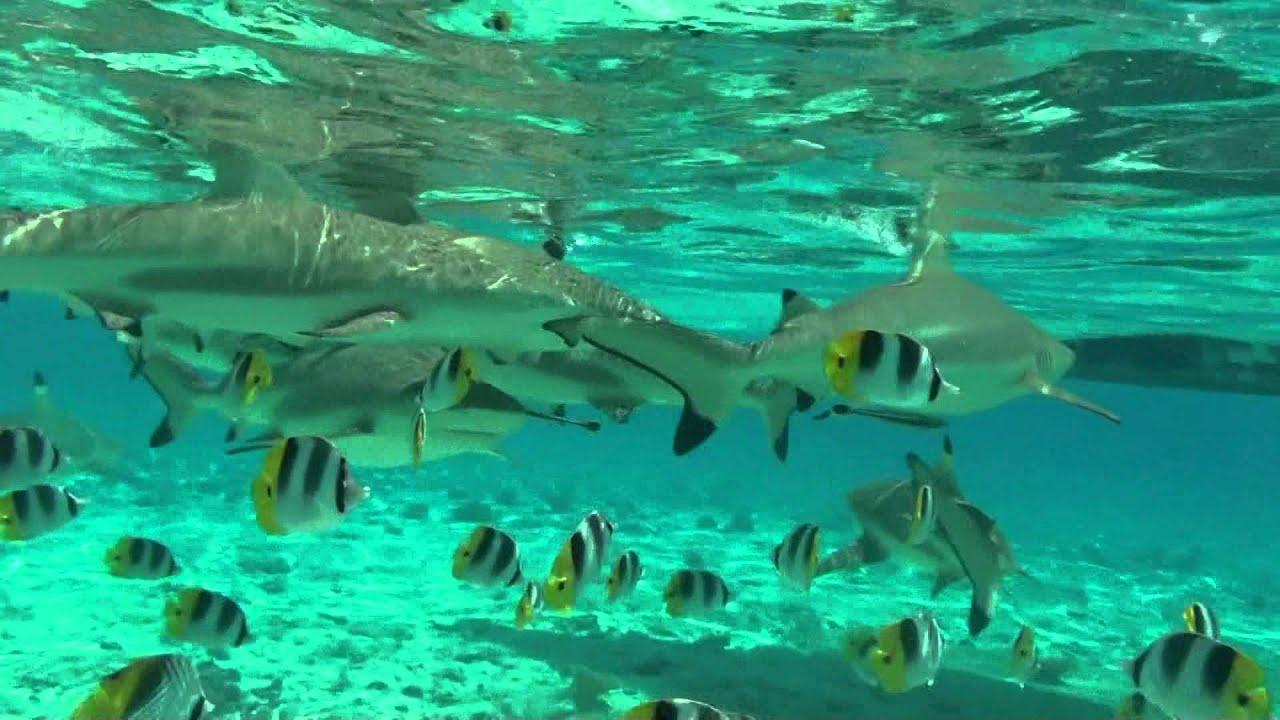 Bora Bora Snorkeling Hd Youtube