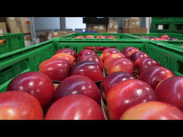 Progetto Post-Fruit. Conservazione del prodotto frutticolo e contenimento di malattie dopo raccolta.