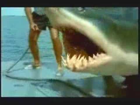 HISTÓRIA DE PESCADOR (TUBARÃO) - SHARK ATTACK