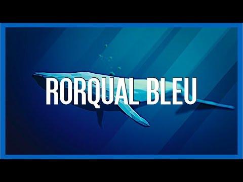 la Baleine Bleue - IRL