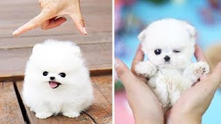 Cute Puppies  Cute Funny and Smart Dogs Compilation #3 | Cute Buddy