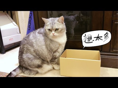 猫咪把自己装进了比身体还小的盒子里,你果然只是毛茸茸的!
