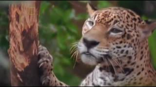 World's Deadliest Animals  Costa Rica  Wild Nature  National Geographic