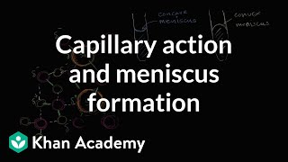 Capillary Action And Why We See A Meniscus