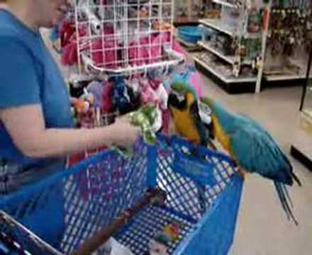 Birds Trip to the PET STORE!