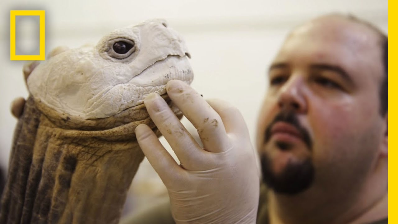 Life After Death: Extinct Animals Immortalized With Taxidermy | National Geographic