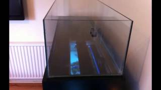 Diy Fish Tank + Stand + Leds Build
