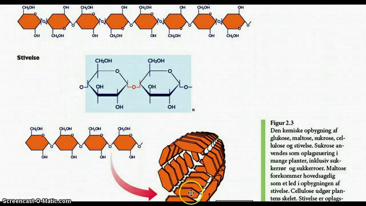 protein opbygning