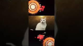 кошки поют деспасито☺😁😄☺😁😄
