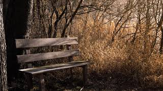 Hermosas melodias instrumentales cristianas - música de adoración ideal para meditar