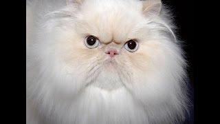Тест: Насколько хорошо ты знаешь кошек?