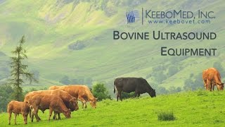 Bovine Ultrasounds Collection | KeeboVet