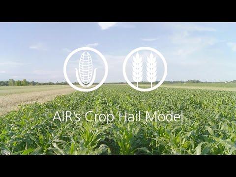 AIR's Crop Hail Model—Reimagine crop risk management