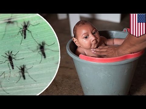 Zika virus infection: woman returning to Texas from El Salvador confirmed positive - TomoNews
