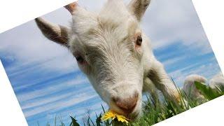 Детские песни про животных на ферме Детские песенки из мультфильмов на лугу♥DIY♥Идеи рукоделия!