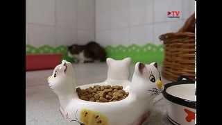 Гостиные для животных в Воронеже