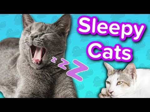 Sleepy Cats! // Funny Animal Compilation