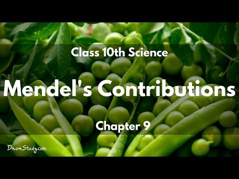 mendels rules Rules of inheritance 2 although the tendency of offspring to resemble their parents has been generally recognized for thousands of years, the rules that govern the inheritance of characteristics were only first worked out about 150 years ago gregor mendel, and austrian monk, worked out the basic rules of inheritance.