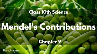 heredity and evolution mendel s contributions cbse class 10 x science biology