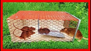 How to Make Mouse Trap - Quick Mouse/Rat Trap Easy! 106