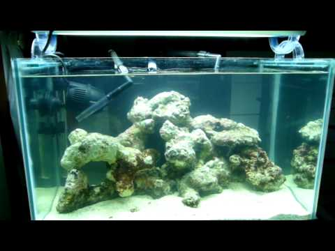 2ft 17g Nano Reef Tank Live Rock Cycling
