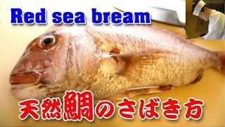 ウロコを飛ばさない!鯛のさばき方#1 水洗い~3枚おろし編(Red sea bream)
