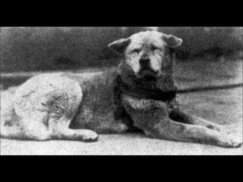 Hachiko a faithful dog