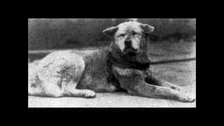 Hachiko a faithful dog