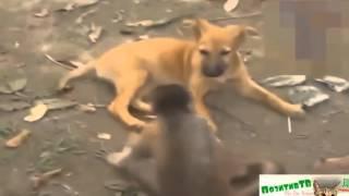 Обезьяны и Собаки, Кошки! Эти смешные животные