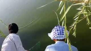 Рыбалка на прудах Ташкента3