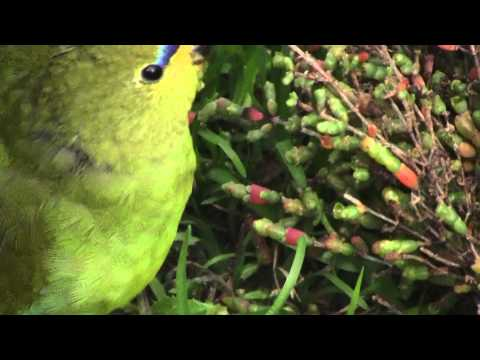 Elegant parrot close up