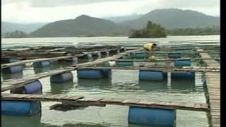 Sturgeon Farming in Vietnam