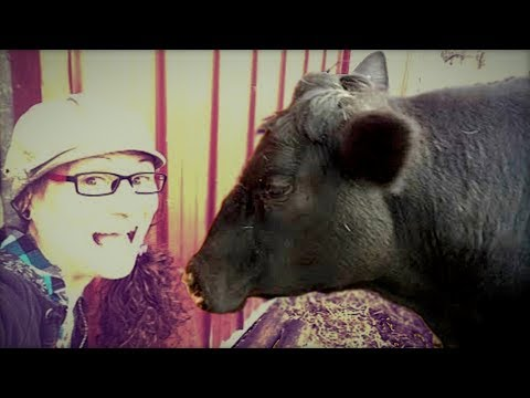 c1b45144c 🔴 LIVE: Cow Playtime! - YouTube