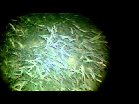 Night Shrimping and Crabbing Ft. Desoto Florida Tampa St. Petersburg Travel Video