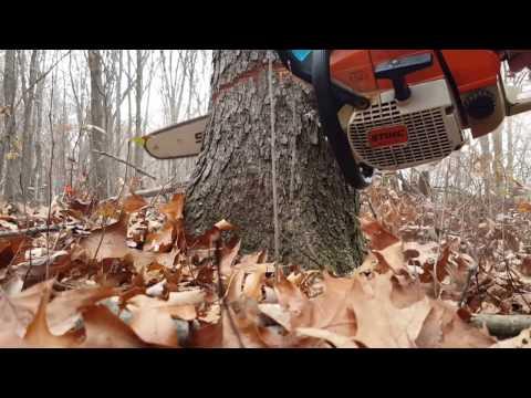 #5 Firewood