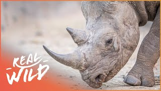 The Strongest Team Spirit In The Animal Kingdom! | Extraordinary Animals | Real Wild Documentary