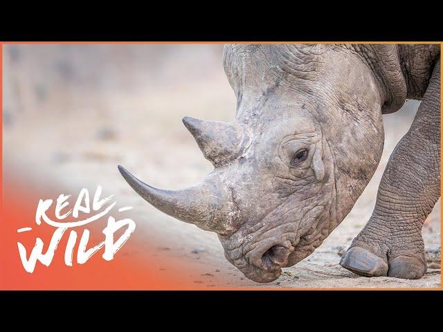 The Strongest Team Spirit In The Animal Kingdom!   Extraordinary Animals   Real Wild Documentary