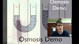Osmosis Demo