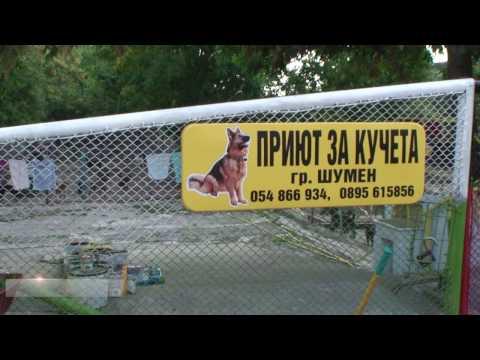 Безплатно кастриране на кучета