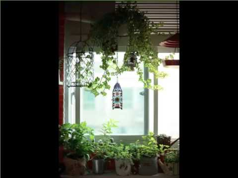 Indoor hanging plants window indoor house or office - How to hang plants in front of windows ...