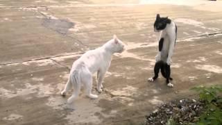 Коты на разборках. Кот гопник